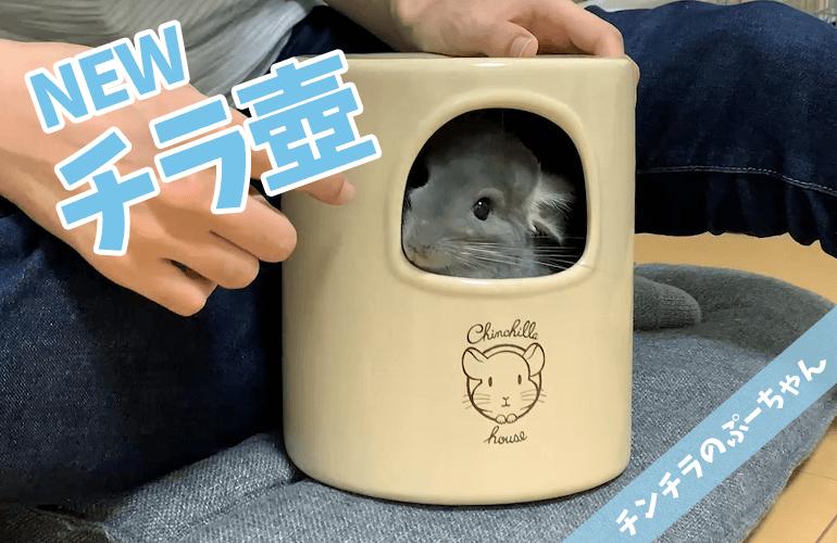 【チンチラ】新しいチラ壺が可愛すぎる!CASAの新商品「チンチラの砂浴びもできるハウス」
