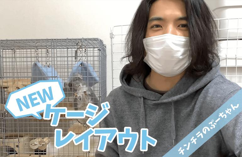 チンチラのケージレイアウト一挙公開!ぷーちゃんのお家をより快適にするためにプチリフォーム!