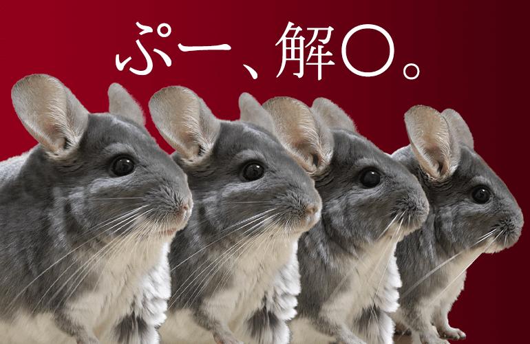 【チンチラ】ついにぷー解○!?
