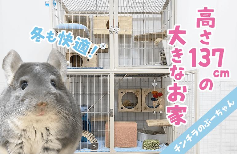 【4階建て大型ケージ】チンチラの巨大ケージルームツアー!
