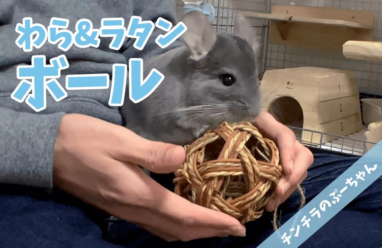 【チンチラのおもちゃ】1番の食いつき!?ぷーちゃんに「わら&ラタンボール」をプレゼント!