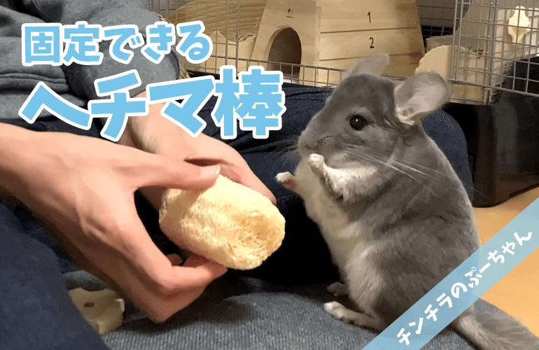 【チンチラのおもちゃ】おもちゃが好き過ぎるぷーちゃんに「固定ヘチマ棒」をプレゼント!