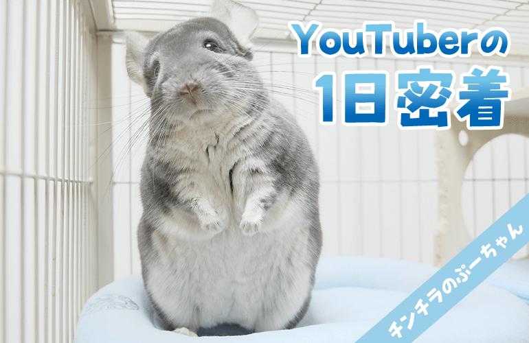 【パロディ】チンチラYouTuberの1日に密着【YouTuberの裏側】