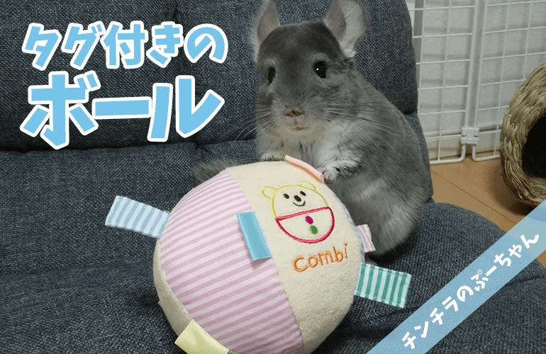 【チンチラのおもちゃ】タグだいすきぷーちゃんにタグ付きボールをプレゼント!