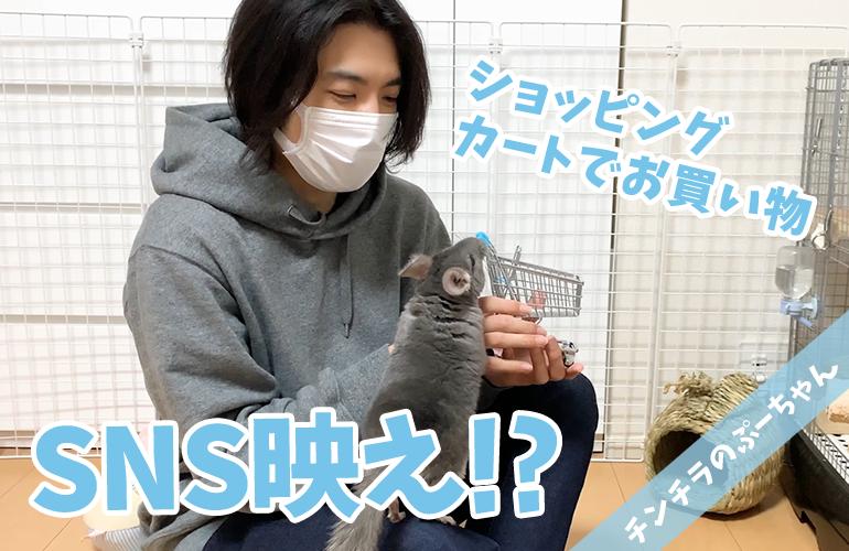 【チンチラ】SNS映えする写真が撮りたい!ぷーちゃんとミニチュアショッピングカート!