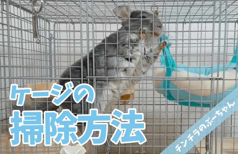 【チンチラ】意外と簡単!毎日のケージのお掃除方法!【chinchilla】