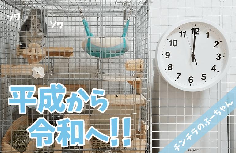 【チンチラ】平成から令和へ!その時ぷーちゃんは!?
