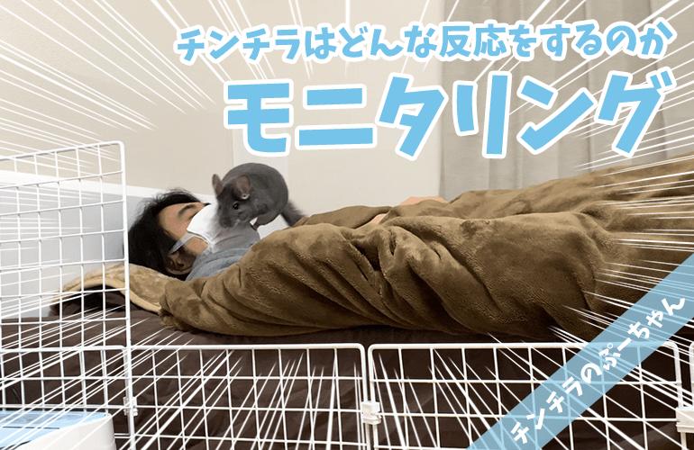 【モニタリング】飼い主が寝ていたらチンチラはどんな反応をするのか?