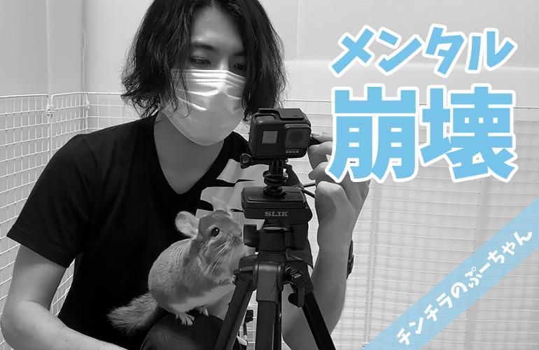 まさかの「24時間ツムツム生活」撮影失敗!ぷーちゃんと2人メンタルが崩壊!