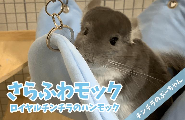 【チンチラ】破壊神ぷーがまたまたベッドを破壊!ついにロイヤルチンチラのハンモックの出番!