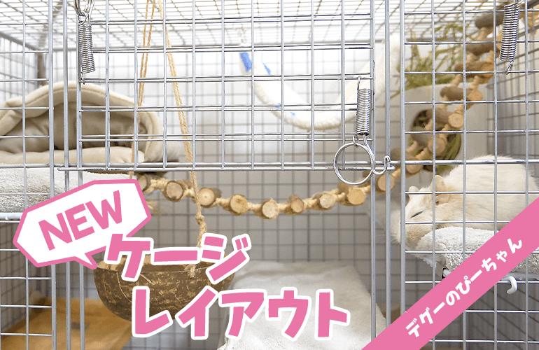 【デグー】新しいケージレイアウトにぴーちゃんおおはしゃぎ!