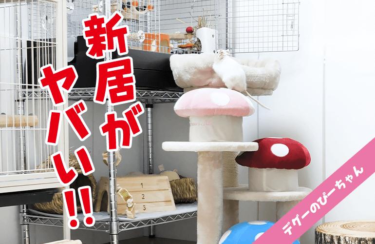【引っ越し】まるでタワマン最上階!はじめての新居に興奮が隠せないデグーがこちら!