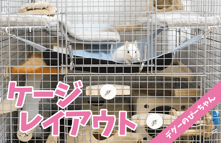 【デグー】ケージレイアウト紹介!イージーホームハイメッシュ