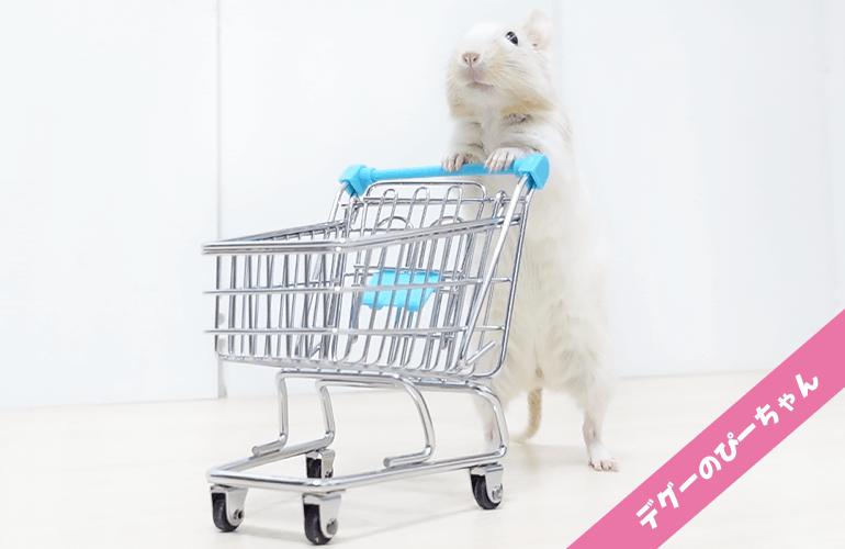【お買い物ごっこ】ショッピングカートでお買い物するデグーが可愛すぎる!