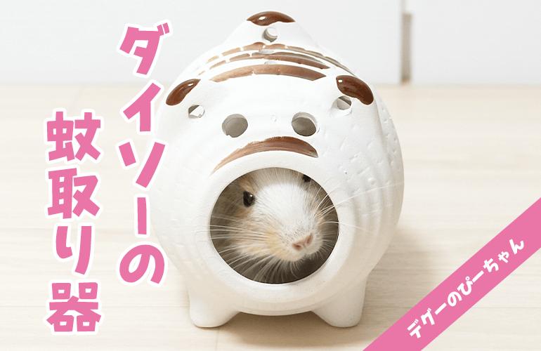 【ダイソー】豚の蚊取り器にすっぽりハマるデグーが可愛い