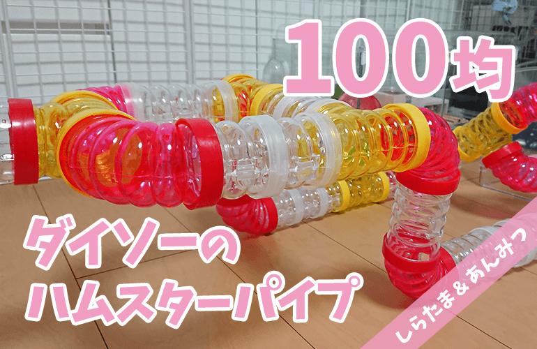 【ハムスター】100円ショップダイソーのハムスターパイプで巨大アスレチック!