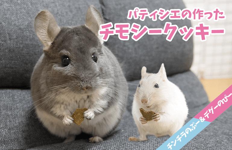【チンチラ&デグー】贅沢なおやつ!パティシエの作った高級チモシークッキー!