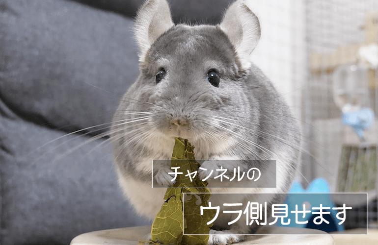 【お知らせ】サブチャンネル「ちーちゃんねるのウラ側」はじめました!