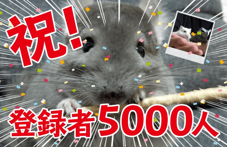 祝!YouTubeチャンネル登録者5000人突破!しらたまとあんみつとぷーちゃんとお祝い!