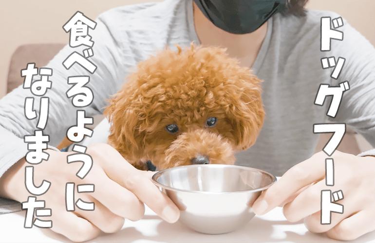 ドッグフードを食べなくなった子犬が食べるようになった方法とは【トイプードル】