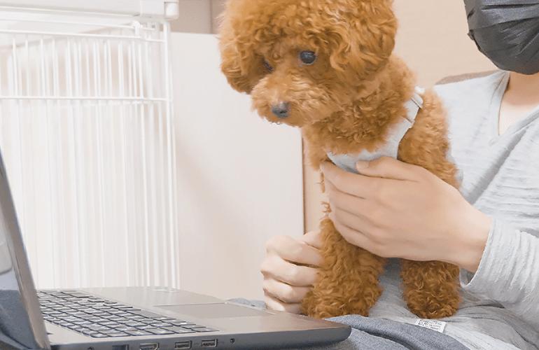 犬に自分が出ている動画を見せたらカオスすぎた【トイプードル】