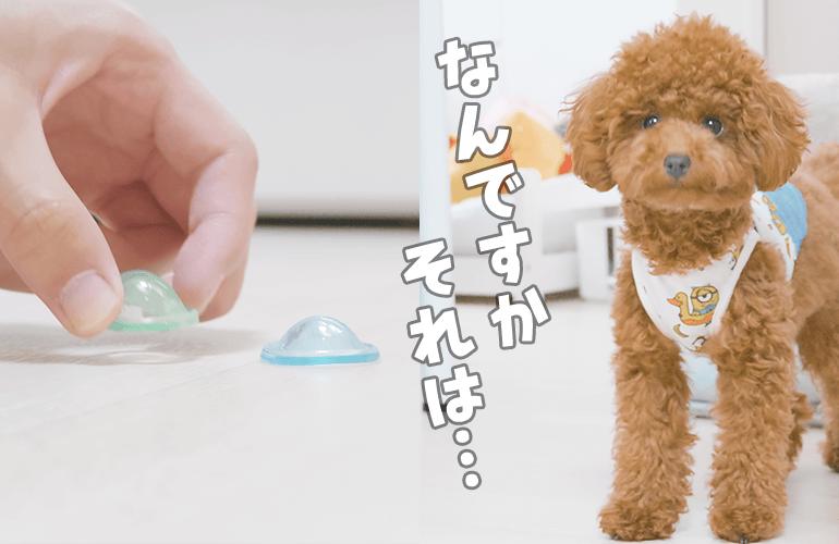 これ知ってる?謎のおもちゃで犬を誘ってみた結果…【トイプードル】