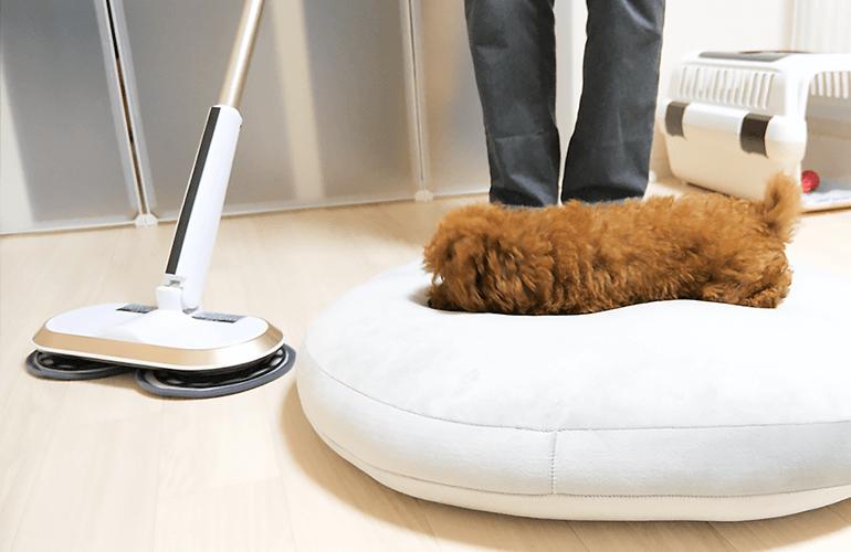 ビビリなのに好奇心旺盛な子犬の掃除中の様子がこちらw【トイプードル】