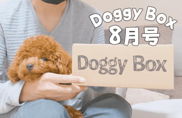 ドギーボックスが届いたことを伝えたら犬の反応が可愛すぎた【ドギーボックス8月号】