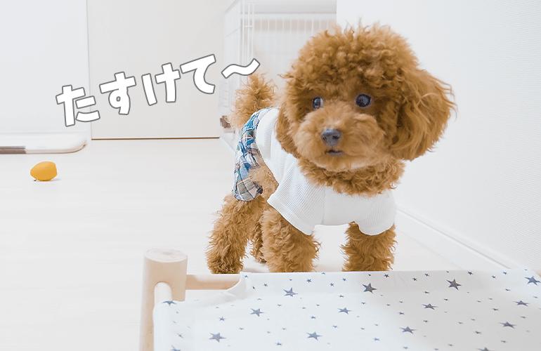【しゃべる犬】困りすぎて変な声が出ちゃった犬