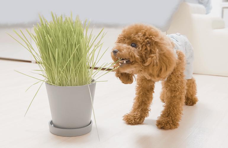 「犬と猫が好きな草」が想像以上に大好きすぎて草