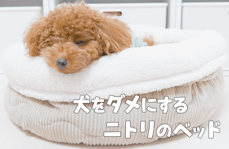 犬をダメにすると噂のニトリのNウォームペットベッドを買ってあげたら愛犬が秒で溶けましたw【トイプードル】