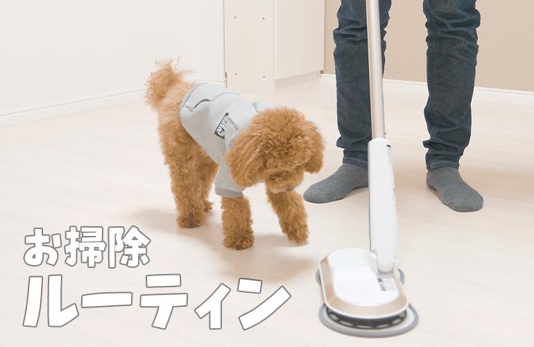 【お掃除ルーティン】ビビりだった子犬が大きくなってこうなった【トイプードル】