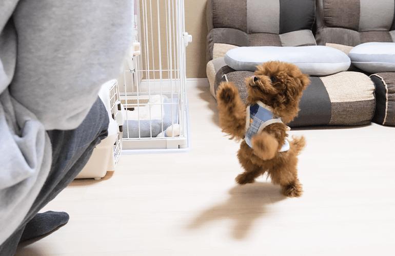 【食事ルーティン】生後3ヶ月の子犬のご飯タイムを撮影してみたら可愛すぎた