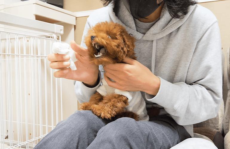 はじめて歯磨きをした時の子犬の反応がこちら