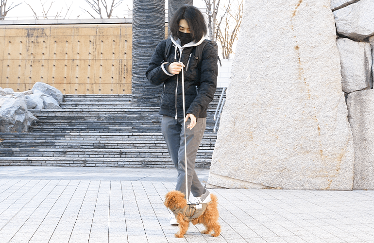ついにお散歩デビュー!生後3ヶ月半の子犬とはじめてお散歩【トイプードル】