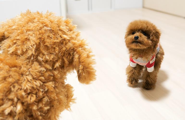 はじめてのお友達!自分にそっくりな犬が突然家にいた時の子犬の反応が可愛すぎた!