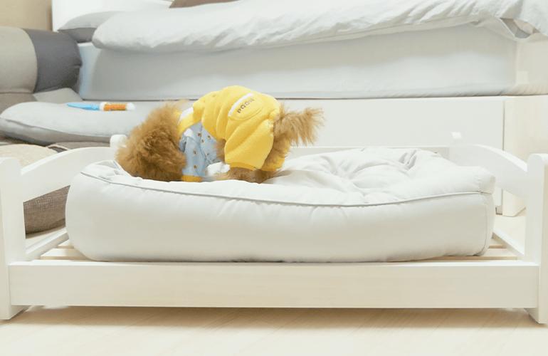 【衝撃】500円のダイソーのペットベッドから1万円のニトリの高級ベッドに変えたら子犬の態度が豹変!