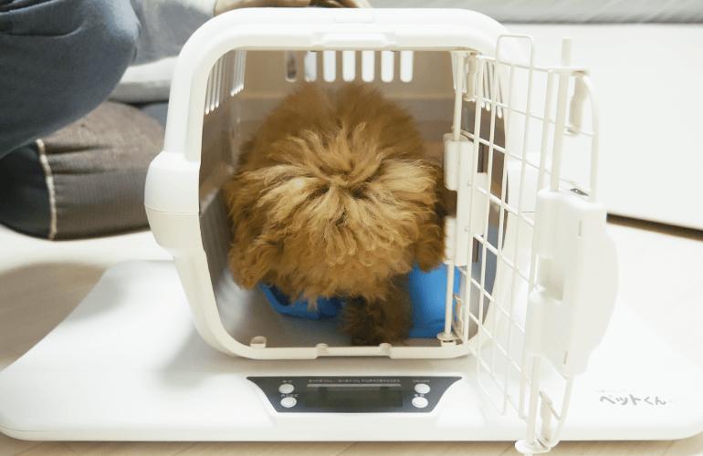 じっとしていない生後4ヶ月の子犬の体重測定!