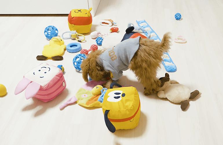 【モニタリング】普段遊んでいるおもちゃの中に新しいおもちゃが混ざっていたら子犬は気づくのか?【トイプードル】