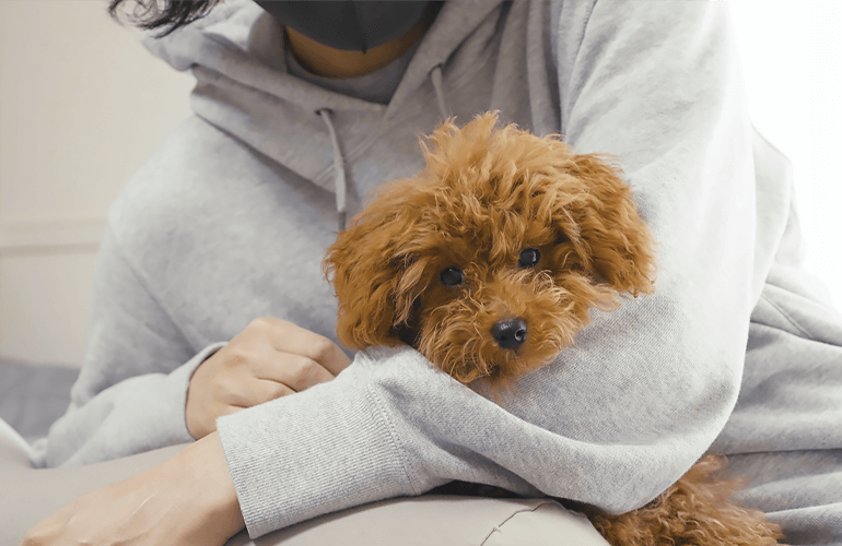 人も犬もダメにするYogiboの高級抱き枕が最高すぎた!