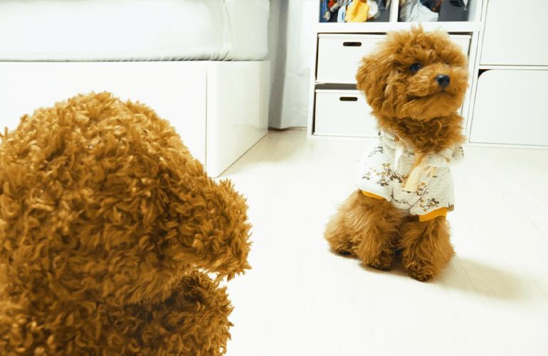 ビビリな子犬 VS 声マネして歩いてくるトイプードルのぬいぐるみ