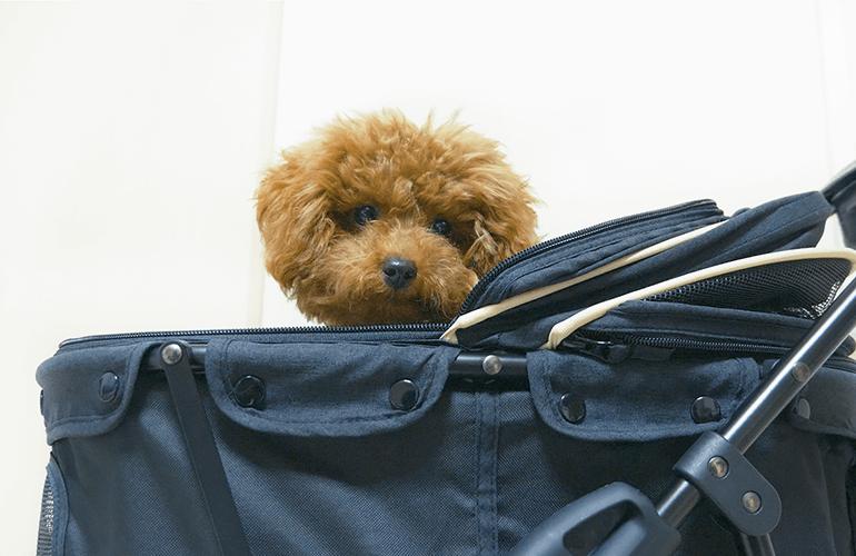 ネット限定のペットパラダイスの犬用ペットカートを買ってみた!