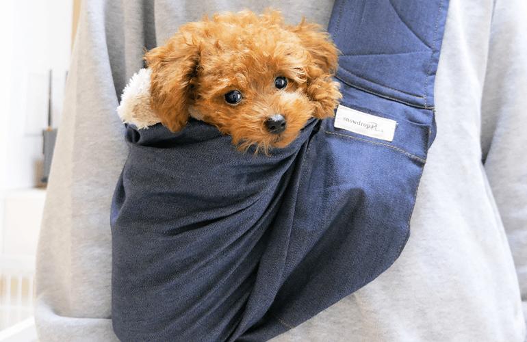 【お散歩】ドッグスリング(抱っこ紐)にすっぽりハマるトイプードルの子犬が可愛すぎた!