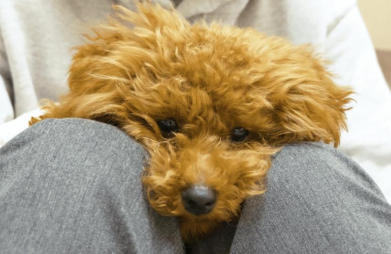 【犬の保育園】はじめて飼い主と離れて過ごした子犬の様子が…