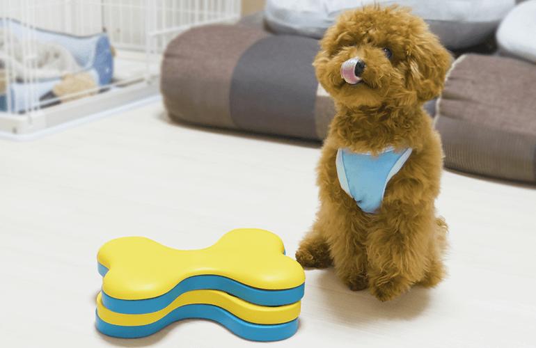 愛犬と知育おもちゃで遊んでみたら術後とは思えないテンションで可愛すぎた!