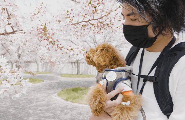 【Vlog】満開の桜と愛犬に癒やされる休日の午後【さくら広場・幕張】