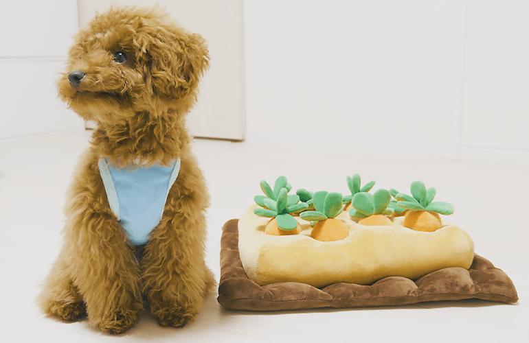 とにかく可愛いと話題の知育おもちゃで遊ぶ犬が想像以上に可愛かった!