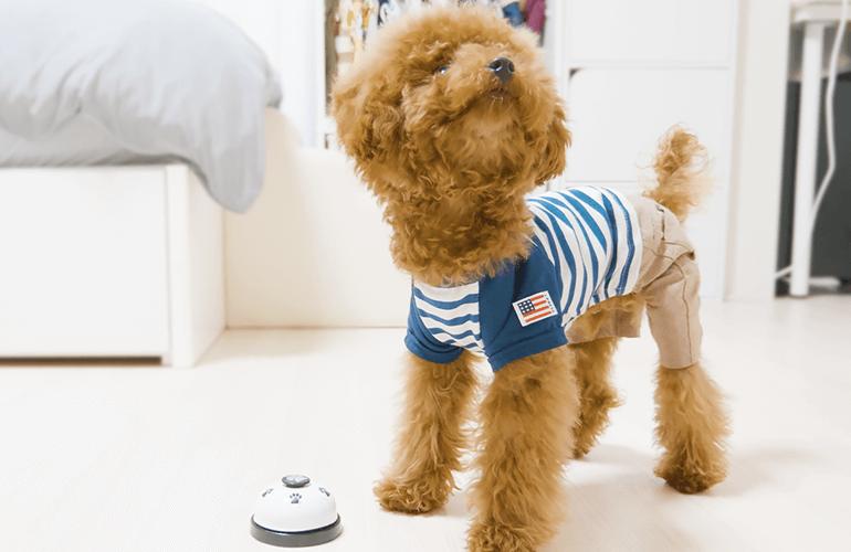 【犬芸】子犬とベルを鳴らす練習をしたら可愛すぎたw【トイプードル】