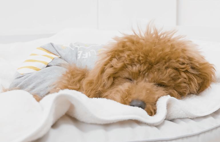 寝ている子犬に唐突に「散歩」と言った結果