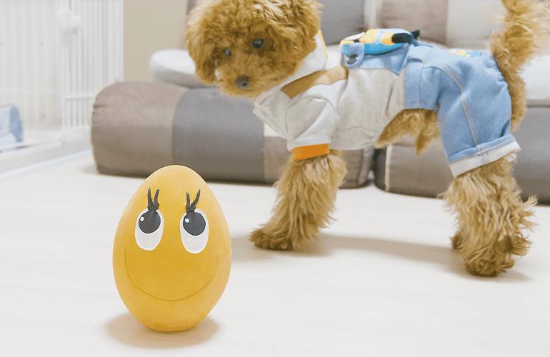 【ドッキリ】目の前で突然おもちゃが大きくなったら子犬はどうする?